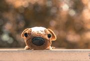 25th Sep 2016 - (Day 225) - Puppy Dog Eyes