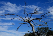 27th Sep 2016 - Tree along the Manley waterfront  Queensland
