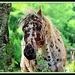 Pretty As A Speckled Pony