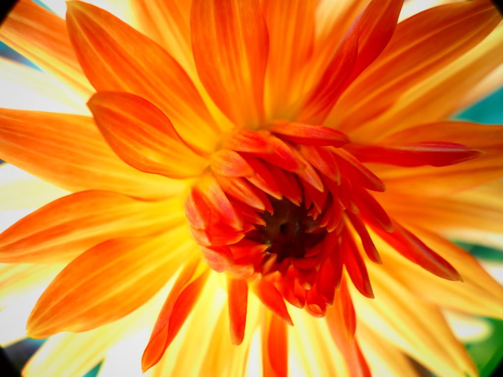 Lady Marmalade by carole_sandford