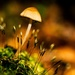 Tiny Mushroom in Macro by jae_at_wits_end