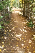 26th Sep 2016 - Down the Trail