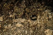 26th Sep 2016 - (Day 226) - Buried Treasure