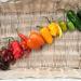 Pepper Rainbow by loweygrace