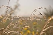 25th Sep 2016 - grass