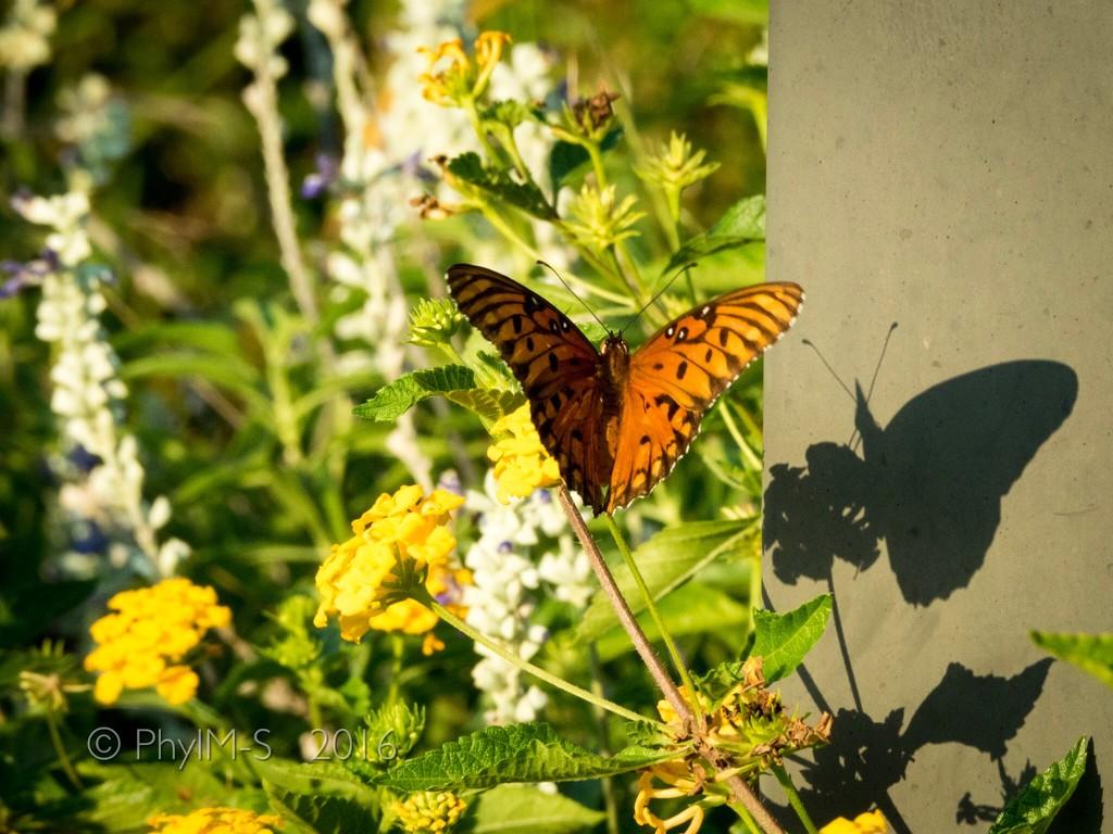 Shadows Flight by elatedpixie