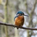 Kingfisher Watching Me!!! by padlock