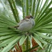 Very Common Sparrow on Exotic Plant by susiemc