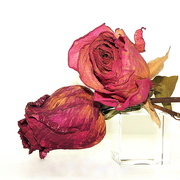 27th Sep 2016 - A rose by any other name... is still a rose!