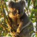 macho stuff by koalagardens