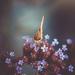 Magical Moth by rosiekerr