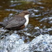 ANOTHER DIPPER by markp