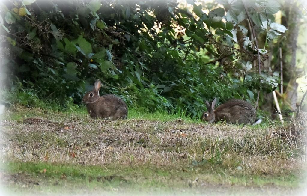 My bunny friends by rosiekind