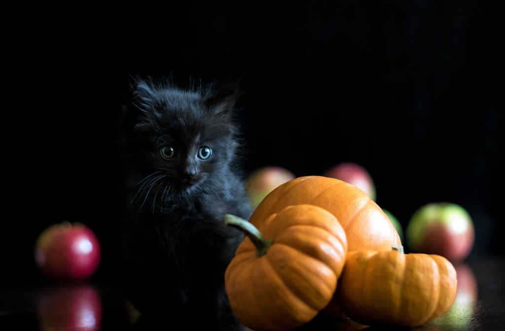 Fall Icons (A.K.A. another cat photo) by bokehdot