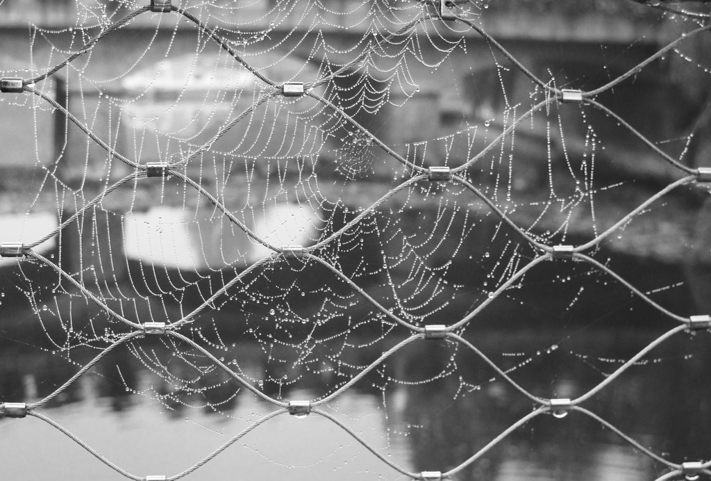 O what tangled webs we weave... by s4sayer