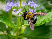 27th Sep 2016 - Bumble Bee Fuel Up