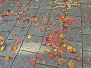 27th Sep 2016 - Fall(en)