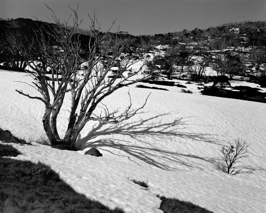 Shadowed by peterdegraaff