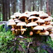 Not Mushroom left! by carole_sandford