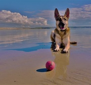 2nd Oct 2016 - The beach, the ball and the dog