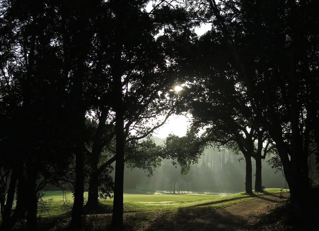 Early Morning on the Golf Course at Moliets  by jamibann