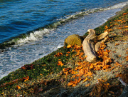 2nd Oct 2016 - Fall Leaves On The Beach
