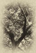 1st Oct 2016 - Water Oak