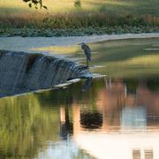 2nd Oct 2016 - Heron on the dam