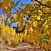 Fall in Colorado  by dmdfday