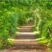 A Woodland Walk by carolmw