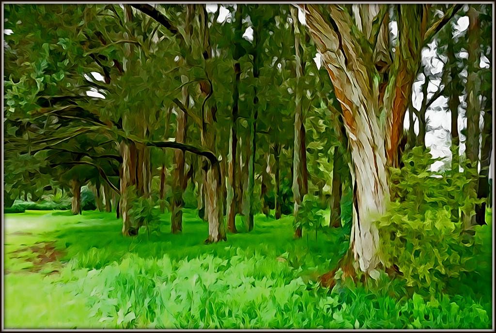 Botanic gardens by dide