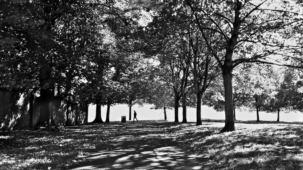 Contre Jour Park Trees (Mobile Phone Shot) by phil_howcroft