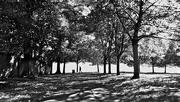 3rd Oct 2016 - Contre Jour Park Trees (Mobile Phone Shot)