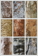 5th Oct 2016 - Tree Bark Collage