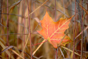 4th Oct 2016 - Colours of Fall!