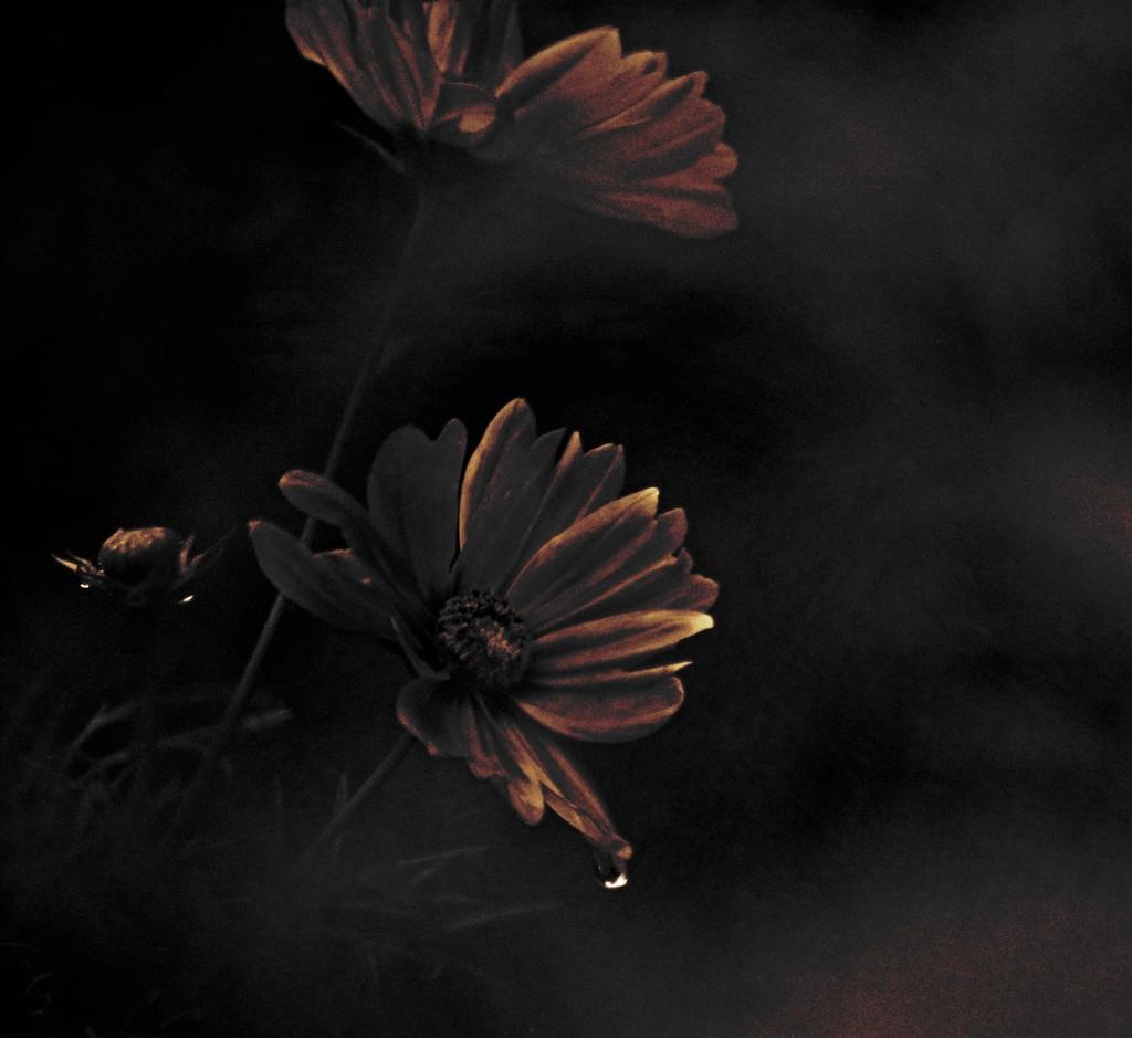 Melancholy  by ziggy77