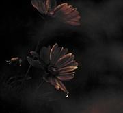 6th Oct 2016 - Melancholy