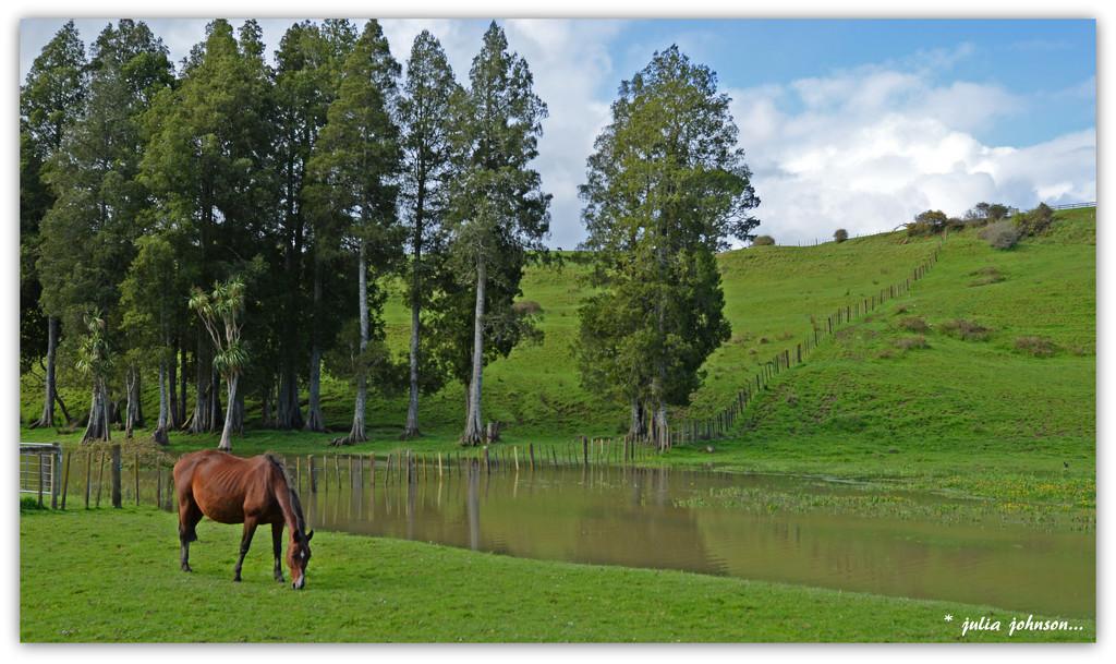 Horse and Kahikatea's.. by julzmaioro