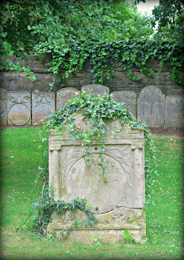 Ivy Adornement.  by wendyfrost