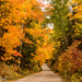 Fall Colours by radiogirl