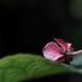 Serenity by leonbuys83