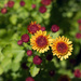 Fall Flowers by jaybutterfield