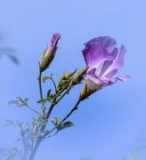 7th Oct 2016 - Wildflower beauty