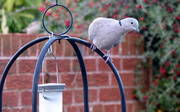 10th Oct 2016 - Bird