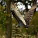 Vulture in Rain by kareenking