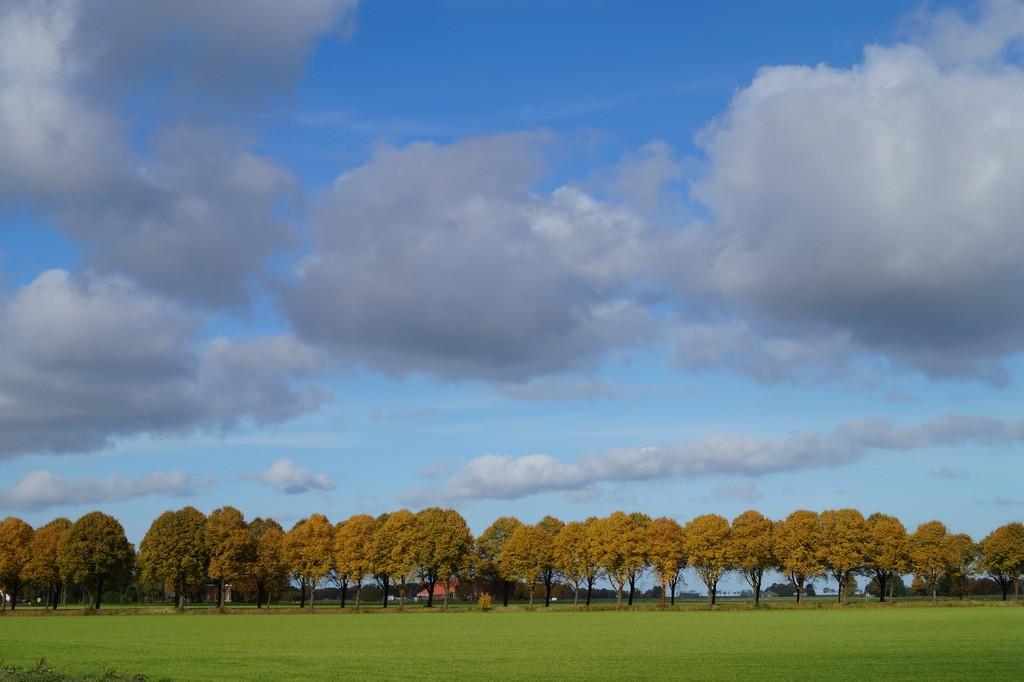 autumn landscape by gijsje