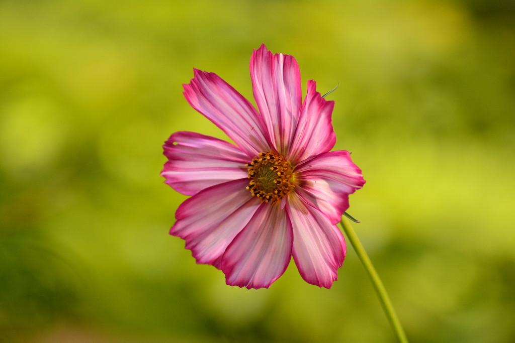 Still blooming by ziggy77