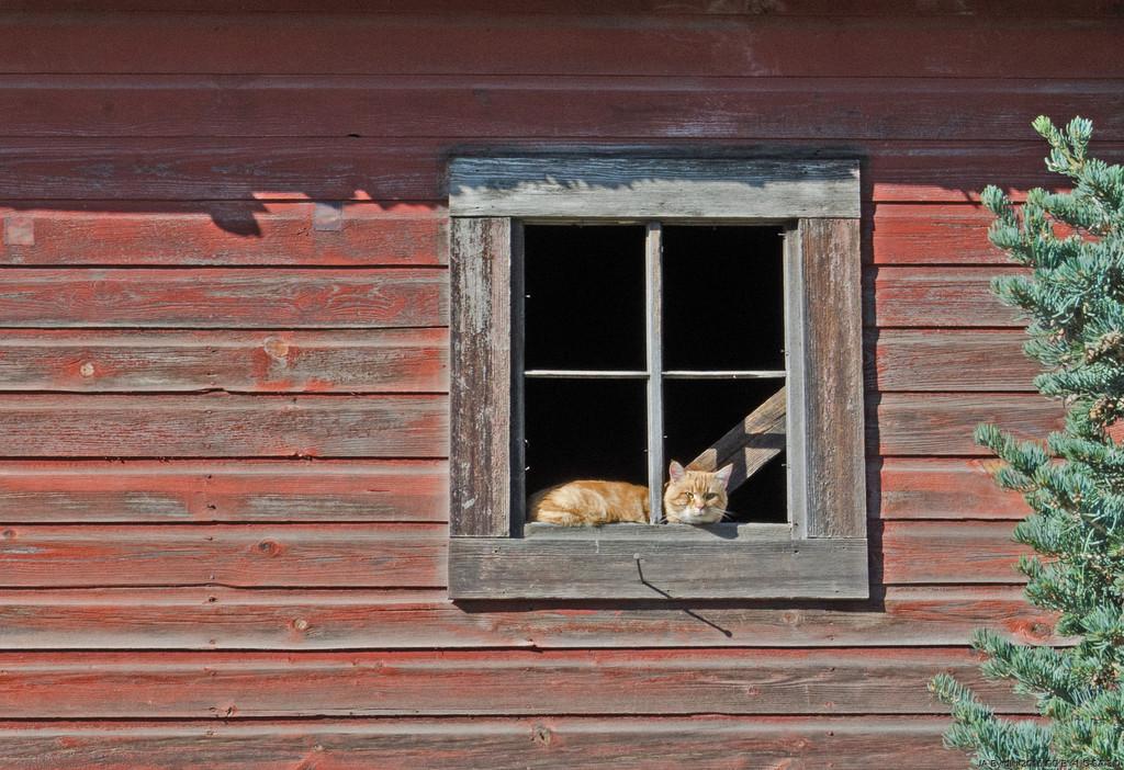 Cat In Window by byrdlip