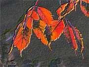 11th Oct 2016 - Autumnality