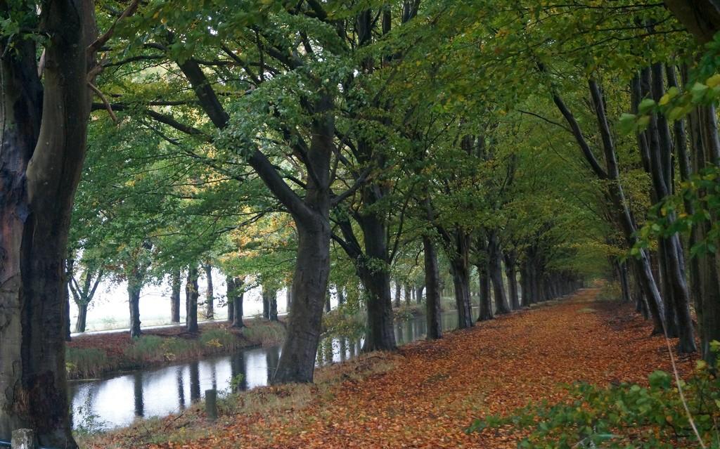 trees along a canal 2 by gijsje